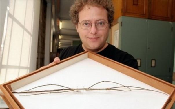 Britain Very Long Bug
